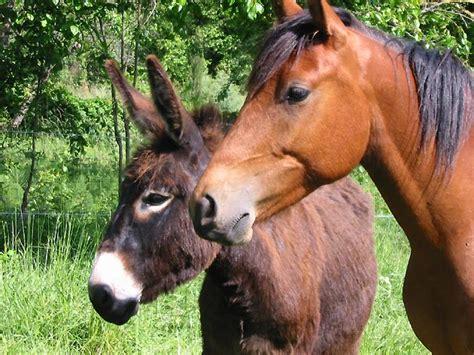 cours de cuisine bretagne photo ane et cheval