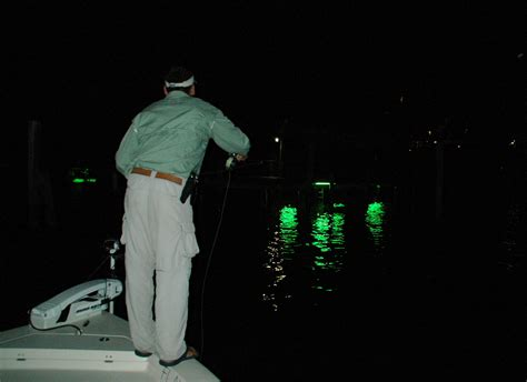 snook fishing winter lures these deadly docklight fly fish