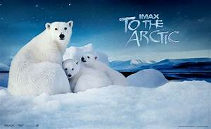 IMAX: To The Arctic - A Story About Family, Love & Survival