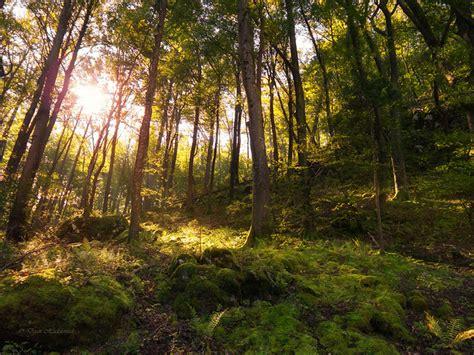 sunlit forest flickr photo sharing