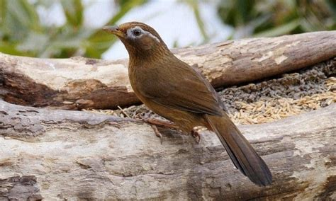 Download suara burung flamboyan betina lagu mp3 dan video mp4. Burung Flamboyan Jantan Dan Betina / Ciri Khas Burung Sikatan Londo Dan Habitatnya - Di hutan ...