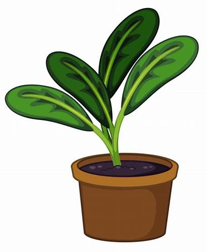 Plant Clipart Potted Plants Pot Animated Seedling