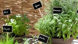 Herbes Aromatiques En Pot : comment planter des plantes aromatiques sur son balcon ~ Premium-room.com Idées de Décoration
