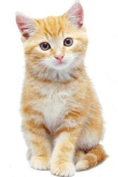 Cat Pictures  All Time Favorite Images Of Cats  Pets World