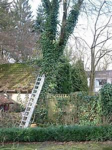 Hanseat Immobilien Delmenhorst : bilder und fotos zu ellmers andreas gartengestaltung u pflege in delmenhorst am dwoberg ~ Frokenaadalensverden.com Haus und Dekorationen