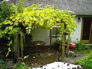 Build Pergola Designs Grape Vines DIY PDF plans building a