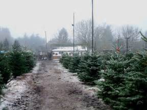 christmas tree farm 169 terry joyce geograph britain and