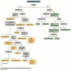 Flow Chart Microbiology Unknown My Favorite Flow Chart