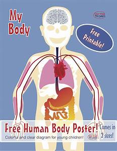 Free  Clear And Colorful Human Body Diagram  Anatomy  From