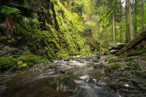 Black Forest  Kathinka's World