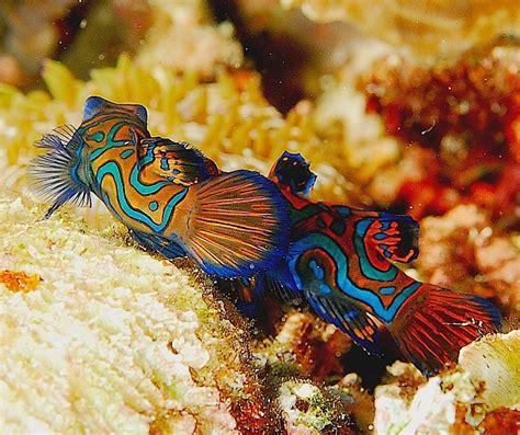 reproduction poisson en aquarium 28 images aquarium eau douce tetra pondoir filet pour
