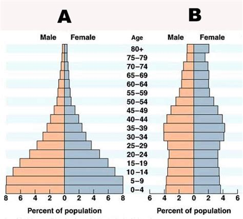 Age Structure Diagram quia ap chapter 52 population ecology basic