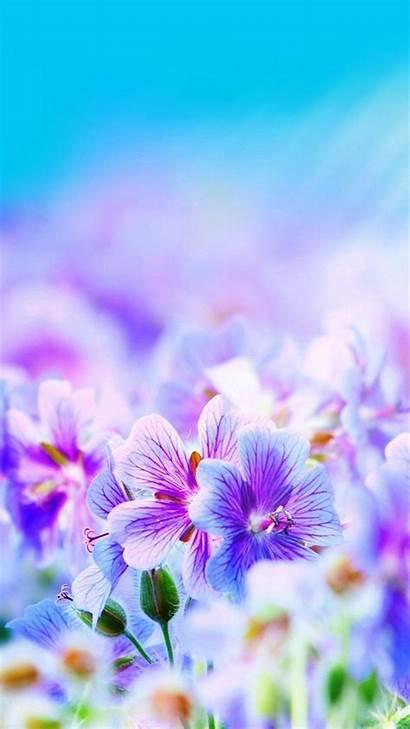 Iphone Flower Flowers Wallpapers Purple Desktop Pretty