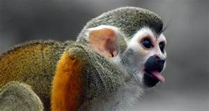Facts About Monkeys Redgage