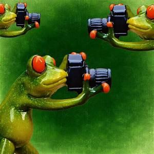 Frosch Bilder Lustig : kostenlose illustration fotograf frosch lustig kamera kostenloses bild auf pixabay 1068163 ~ Whattoseeinmadrid.com Haus und Dekorationen