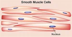 smooth cells - Sök på Google | cells etc | Pinterest