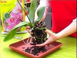 Orchideen Schneiden Video : orchideen schneiden pflegen umtopfen youtube garten ~ Frokenaadalensverden.com Haus und Dekorationen