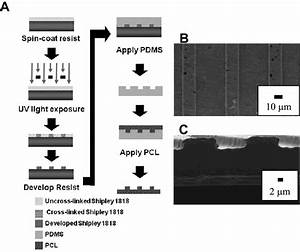 Micromolding Fabrication Of Pcl Tissue Engineering
