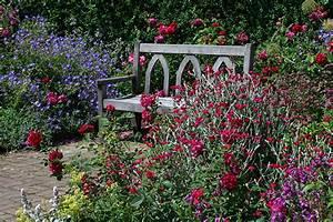 Wallpapers United Kingdom Garden Rosemoor Roses Nature ...