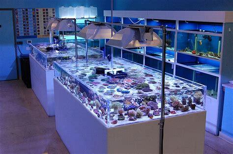 aquarium accessories shopping blue reef aquatics tropical fish tropical fish store las vegas