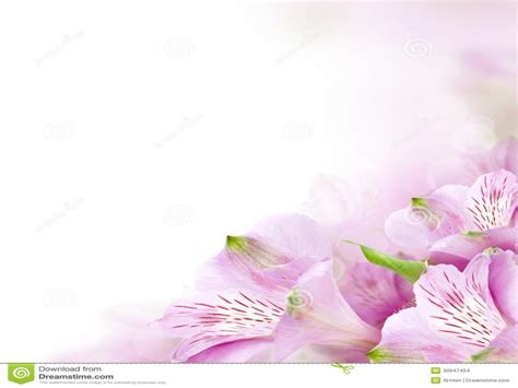 flower border design backgrounds  powerpoint templates