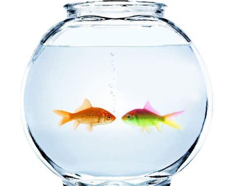 amazing ways   care   pet fish  pets