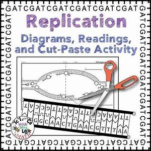 Dna Replication Activity  Diagram  And Reading For High