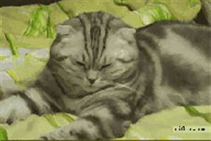 Sleepy Cat Falling GIF - Find & Share on GIPHY