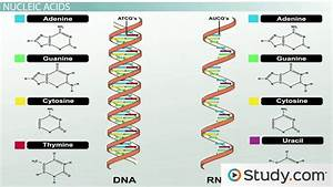 Major Elements In Biological Molecules  Proteins  Nucleic