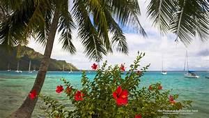 Red Hibiscus at Opunohu Bay Tahiti Computer Wallpapers ...