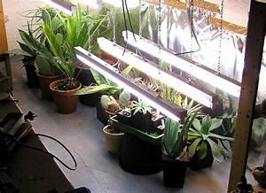 Pflanzen Im Treppenhaus : kakteenforum lithopsforum und sukkulentenforum von thomas schmid thema anzeigen ~ Orissabook.com Haus und Dekorationen