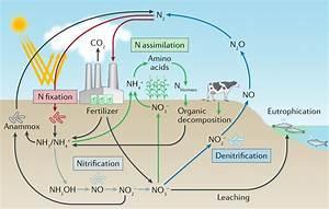 Nitrogen Fixation Diagram