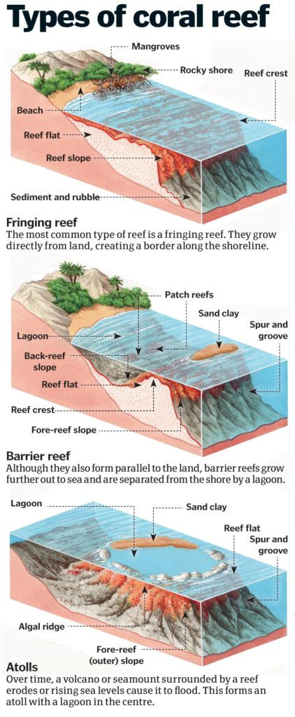 coral reefs exploring  rainforest   seas