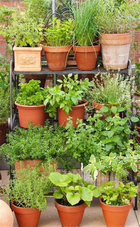 ideas  herbs garden  pinterest growing