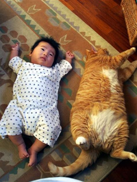 Funny Cats Baby And Cat