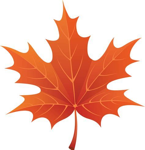 Pictures Of Maple Leaves Clipartsco