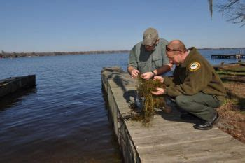 Lake Waccamaw Boat Rentals by State Planning To Deal With 605 Acres Of Hydrilla In Lake