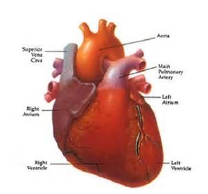 Heart Disease Image-Heart Disease Pictures - Simple Health Secrets Heart Diseases