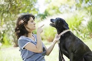 why you should never spank your dog petmedsr pet health blog With dog discipline classes