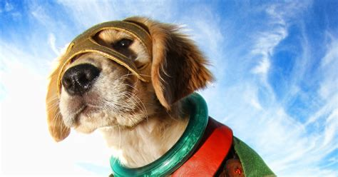 Superhero puppies in 'Super Buddies': Exclusive clip