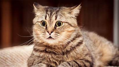 Cat Funny Desktop Wallpapers Surprise Xiaomi Striped