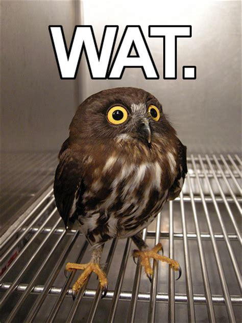 Owl Who Meme - owl wat know your meme