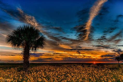 florida gallery firefall photography