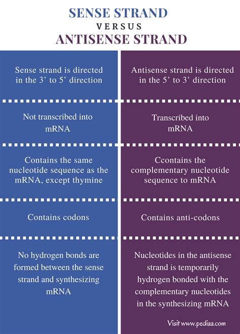 difference between template strand and coding strand difference between sense and antisense strand definition characteristics structure