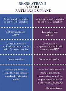 difference between sense and antisense strand definition With difference between template and coding strand
