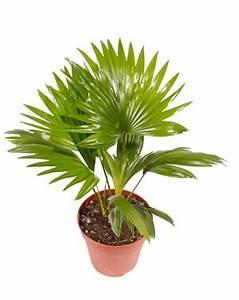 Pflanzen Für Den Garten : beliebte tropische pflanzen f r den garten ~ Frokenaadalensverden.com Haus und Dekorationen