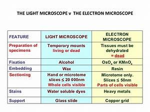 How Are Light Microscopes And Electron Microscopes Similar