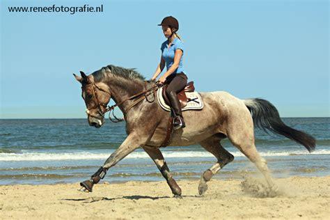 nice horse bokt deviantart