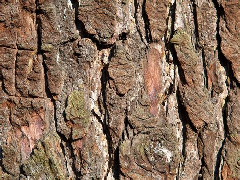 Wallpaper Free Tree Images by Wallpapers Tree Bark Wallpapers