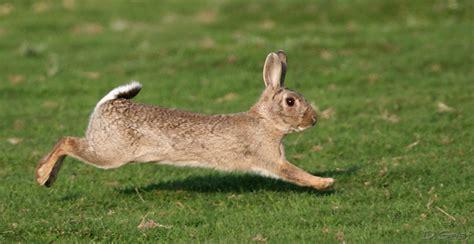 cuisiner le lapin de garenne éducation à la nature le lapin de garenne ekolien